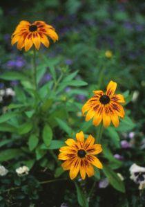 disneyflowers